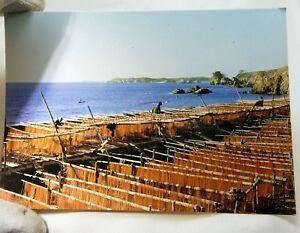 """Japan Sendo-no-hama Daiozaki Postcard 6X4"""" vintage 1950's"""