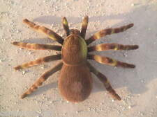 "7"" x 4.5"" Spider Tarantula Fake Prank Brown Tan Halloween Prop Flocked Fuzzy New"