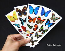 Temporary Fake Butterfly Tattoos - 5 sheets (25 tattoos), Colorful Butterflies