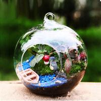 Hängende Glaskugel Vase Blume Blumentopf Terrarium Container Party Hochzeit Deko