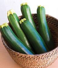 Zucchini (Dark Green) Garden Vegetable seed 1/2 oz prepack(Approx. 75-85 seeds)