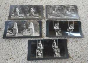 Vintage 5 Different Stereoview Cards Polar Bears Keystone Bronx Zoo NY