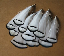 10 pcs white beautiful 2-4 inch golden pheasant feathers