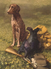 GERMAN SHORTHAIRED POINTER LOVELY DOG GREETINGS NOTE CARD DOG SITS BY GUN