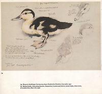 Bella Vintage Uccello Stampa ~ Moscovia