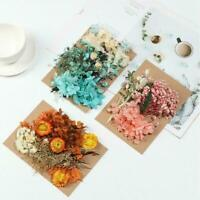 Real Pressed Dried Flowers For Scrapbooking DIY Preserved Decor New Flower C2P3