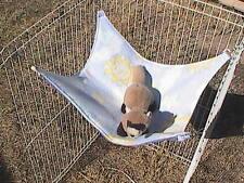 "Ferret Polar Fleece Hammock - Pastel Stars,Suns, Moons Baby Pattern 13"" x15"""