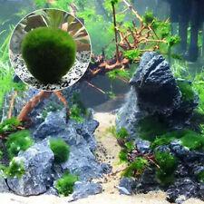 3-5cm Cladophora Live Aquarium Plant Fish Tank Shrimp Nano For MARIMO MOSS BALLS