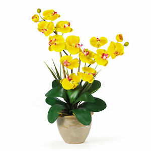 """Phalaenopsis Silk Orchid Arrangement Nearly Natural Double Stem Yellow 25"""" Tall"""