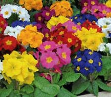 Conservatory/Greenhouse Perennial Flowers & Plants