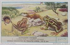Victorian Trade Card,  Batraciens Typiques, Double Concentre De Tomates Liebig