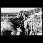 Photo F.002590 THE VALLEY OF GWANGI (1969 JIM O'CONNOLLY MOVIE)