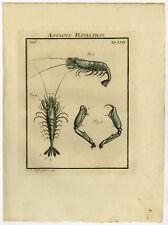 Antique Print-CRANGON-GREY SHRIMP-CHELAE-63-Rosel van Rosenhof-1765