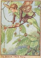 Flower Fairies: The Beech Tree Fairy Vintage Print c1930 by Cicely Mary Barker