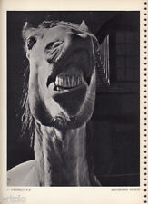 Photogravure  - 1935 -Laughing Horse