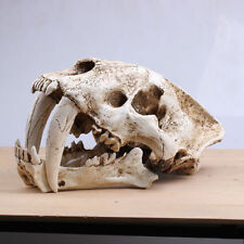 Lifelike Saber Tooth Cat Tiger Skull Sabertooth Smilodon Fatalis Model White