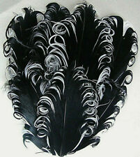 Black on White Goose Nagorie Feathers, Feather Pad     US Seller