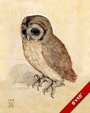 YOUNG LITTLE OWL ALBRECHT DURER SKETCH PAINTING AVIAN BIRD ART REAL CANVAS PRINT