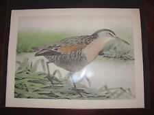 Original 1930  Rex Brasher#21La Hand Colored Bird Print  LA Clapper #21aREX2 DSS