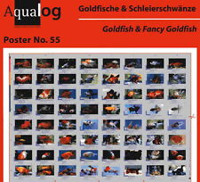 AQUALOG Poster Goldfish and Fancy Goldfish, LAMINATED