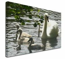 More details for swans and baby cygnets x-large 30