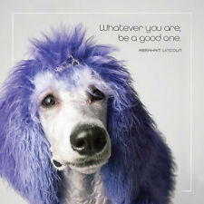 Dog Studio Friendship Card - WHATEVER YOU ARE (Poodle) - #DS-C-FB-1063-029