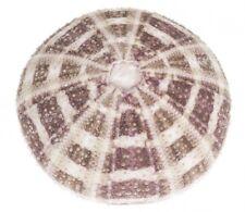 NaDeco® Seeigelgehäuse Alfonso 6-8cm | Toxopneustes pileolus | Rosen Seeigel | m