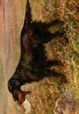 A4 Photo Earl Maud 1864 1943 New Book Dog 1911 Flat coated Retriever Print Poste