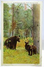 1940S POSTCARD BLACK BEAR AND CUBS, BANFF NATIONAL PARK