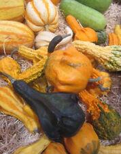 ♫♫ COLOQUINTE 'GRIFFES du DIABLE' ♫♫ Graines ♫♫ Plante Potagère et Décorative ♫♫