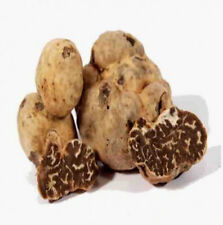 Fresh black truffles Borchii Extra quality 100 grams Tuscan black truffle