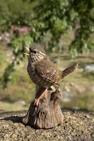 Singing Wren (Troglodytes) Standing On Stump - Motion Activated Singing Figurine