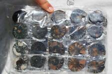 7948i LOT of FIFTY50 RARE 1in100 BLACK Ammonite PAIR Crystal FOSSIL MEDIUM 3-4cm