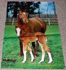 ADELE & HER FOAL Horse & Baby Chrome Photo Poster 1977 Minerva Denmark