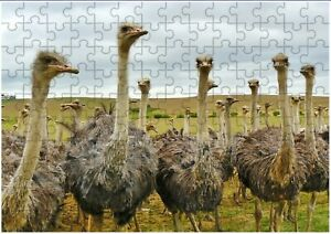 Ostrich A4 JIGSAW Puzzle Birthday Christmas Gift (Can Be Personalised)