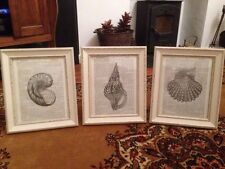 Vintage Shabby Chic Feature Wall Picture Art Images Sea Shells X3 Bathroom Beach