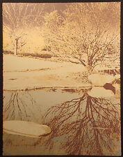 """Ted Thomas """"Looking Glass I"""" Signed Numbered Fine Art Serigraph of trees & pond"""