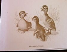 Mallard Ducklings Boxed Note Cards with 10 Cards 10 Envelopes per Box