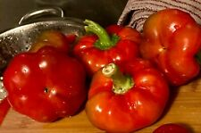 Organic Hungarian Tomato Pepper Seeds. 25 Count. Organic Vegetables.