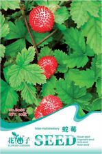 Original Package 50 Indian Mock Strawberry Seed Duchesnea Indica Fruit Seed B088