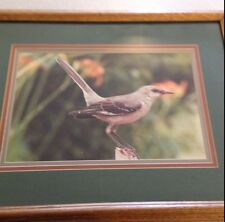 BEAUTIFULLY FRAMED PICTURE OF A PRETTY BIRD SITTING ON A BRANCH RESTING.