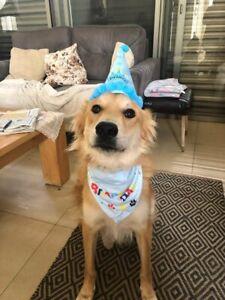 Pet Happy Birthday Hat Party Bandana Neckerchief Ties Party Dress Decoration