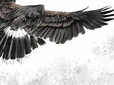 ART PRINT POSTER PAINTING DRAWING EAGLE FLYING FLIGHT WINGS BIRD PREY LFMP1024