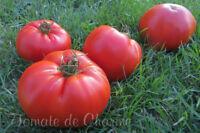 10 graines de tomate rare Sprint Taymer savoureuse productive résistante m.bio