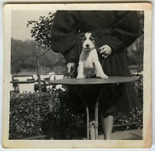 PHOTO ANCIENNE - VINTAGE SNAPSHOT - CHIEN CHIOT TABLE DRÔLE - DOG FUNNY
