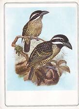 VINTAGE BIRD PRINT ~ HAIRY-BREASTED BARBET ~ JOHN GERRARD KEULEMANS