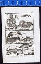 1792 Antique Copper Print - Anteaters & Sloths - Claws - Quadrupeds