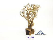 Aquarium Bonsai Driftwood A+++ Moss Tree Shrimp Fish Aquascape -Size Mini- AC748