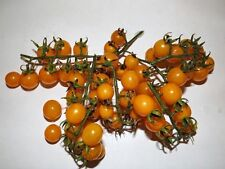 Tomate Golden Currant 5+ Samen - GOLDEN KAVIAR!