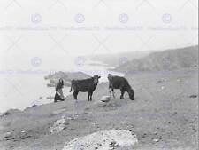 LANDSCAPE ACHILL ISLAND IRELAND COW CATTLE MAYO ART PRINT POSTER BB10355